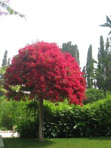Ismu'llahu'l-Asdaq Tree